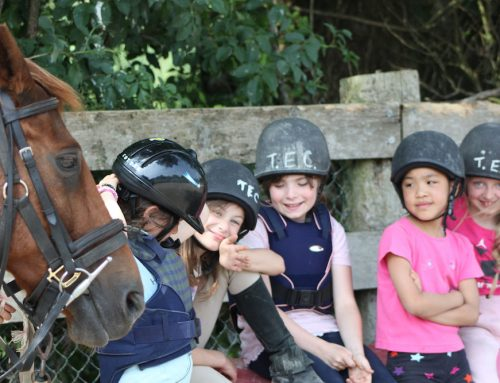 Summer Camps and Saddle Club!